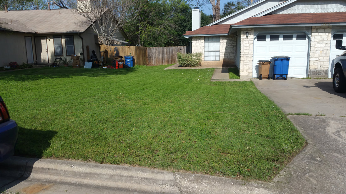 Natural lawn in south Austin