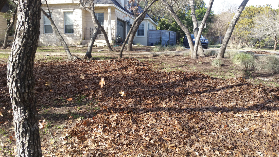 North Austin rental property with deciduous trees.