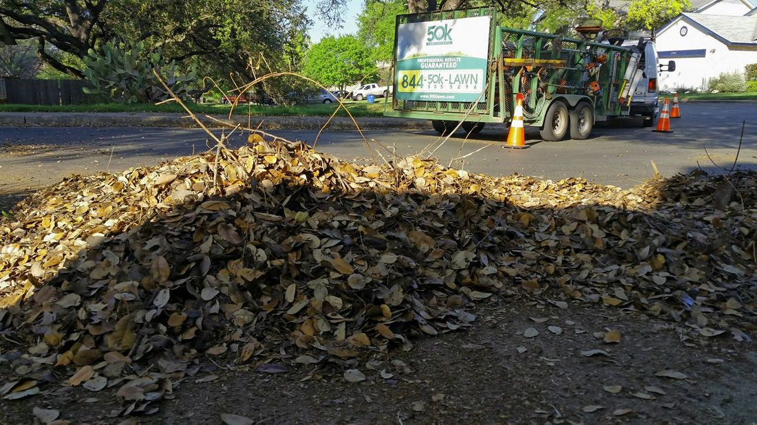 Leaf Cleanup Service in Austin Texas
